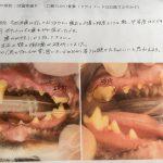 動物の歯周病
