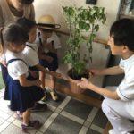 今年も稲築幼稚園からアサガオのお届け